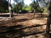 Bitou Busters shocked by damage to bushland