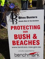 Local bitou bush a growing menace