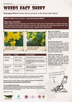 Weed Bulletin Edition 1 - Cassia