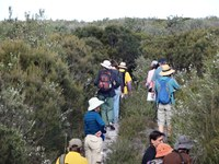 Wildflowers welcome walkers to Spring on the Myall