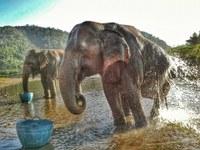 International Volunteer Project // Elephant Nature Park // Chiang Mai, Thailand