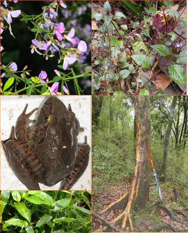 threatened species collage.jpg