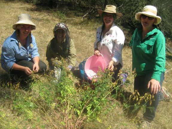 kangarooby-kelsey-tracee-ruth-and-emma-with-smooth-darling-pea-plant.jpg