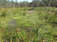 K2C Mini Forum: Diversity in Tableland Wetlands with Donna Hazel