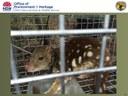 Quolls & other Monaro arboreal mammals