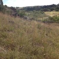 Adventures in Grasslands, ANPS, 8 Feb
