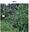 Gibbers bush regen 2013.png