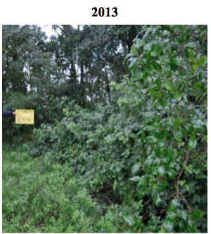 Gibbers site condition 2013.png