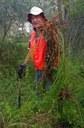 Large Asparagus Fern