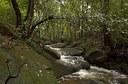 sugarbag-creek.jpg