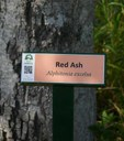 Plant ID signs at the Maclean Lookout