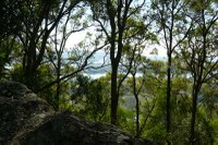 Maclean Forest Linkages: High Conservation Corridors Restoration