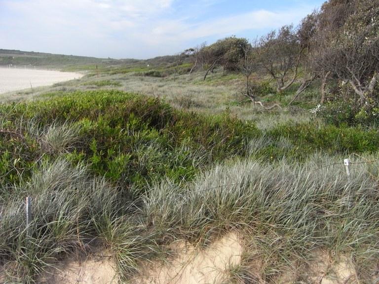 Maroubra Dunes