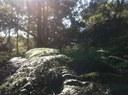Bushland at Manly Warringah War Memorial Park