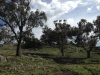 Billy Goat Hill Restoration
