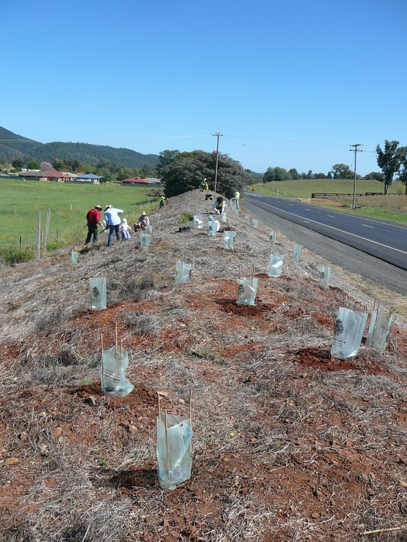 Dubbo Road Planting
