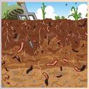 Livestock Under the Ground