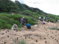 Restoring native vegetation and fauna habitat