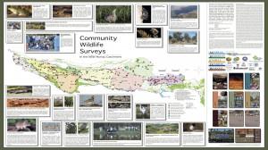 Murray Catchment Wildlife Surveys