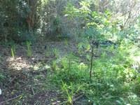 Autumn Planting  2014