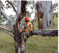 Landcare leading wildlife recovery post-bushfires