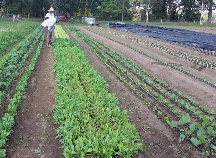Organic Market Garden Mentoring Program