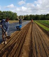 Organic Market Garden Mentoring Project