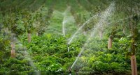 Irrigation Farm Walk
