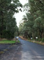 Road safety vs the bush