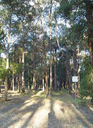 Reddy Park.png