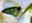 richmondbirdwing.jpg