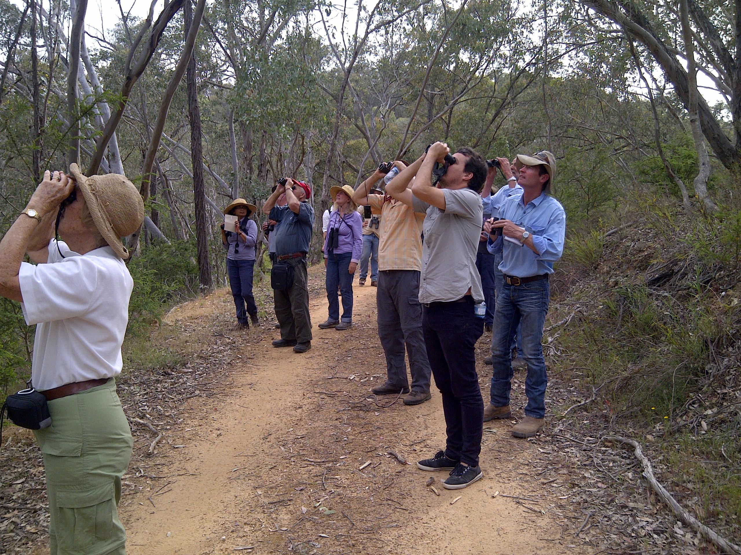 Woodland Bird Walk