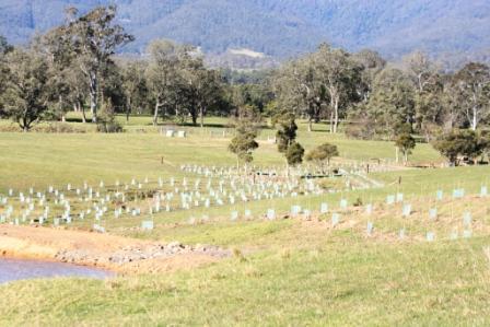 Gully revegetation - Kangaroo Valley