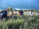 Regeneration of the coastal strip from Smoky Cape to South West Rocks