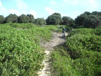 Restore 50 hectares of Dune System and do Follow-Up Weed Control at SWR