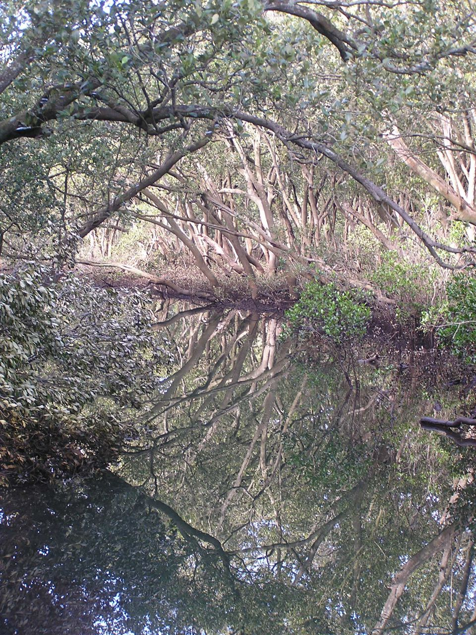 MangrovesWater.jpg