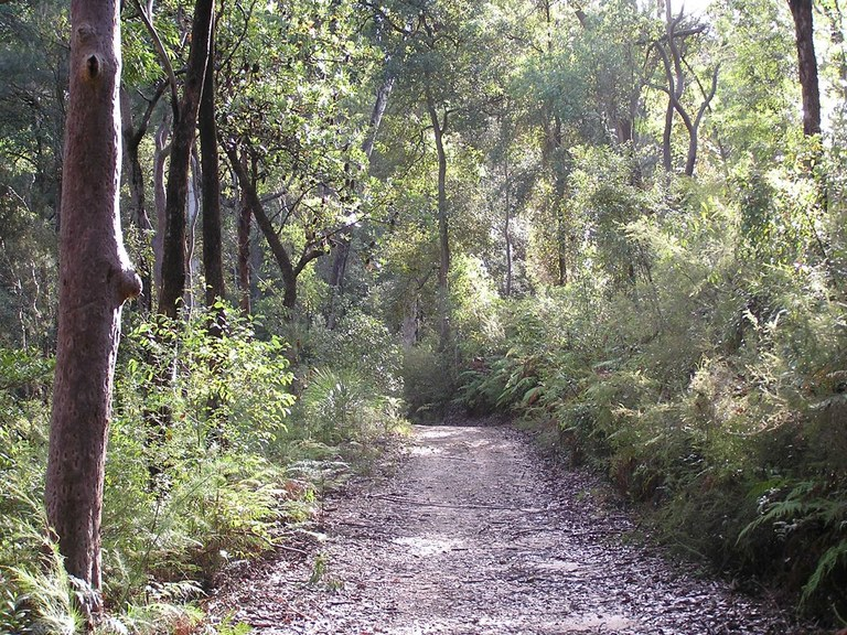 Track through the bush