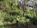 Stobbart Creek Landcare Site