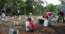 2011  littoral rainforest extention planting beside the bikepath.JPG