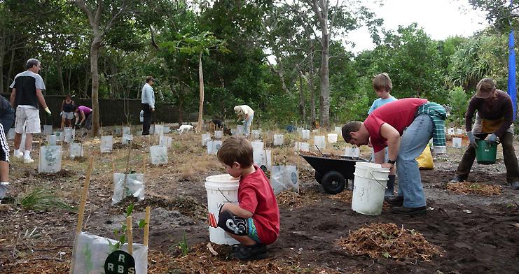 2011  littoral rainforest extention planting beside the bikepath.JPG