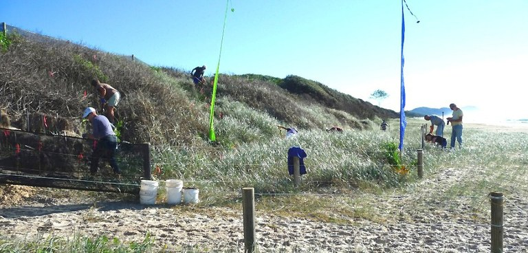 May 2012  Dune Swale Planting.JPG