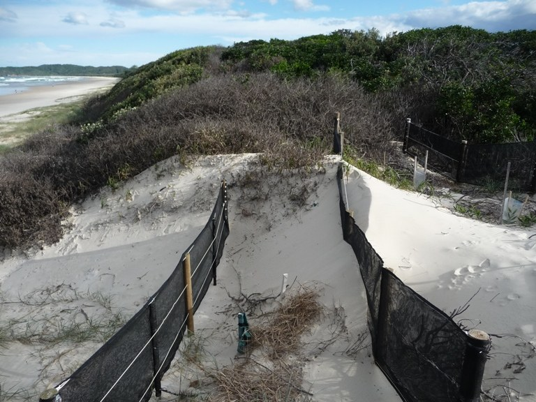 Rebuilding an eroded dune crown  with sand trapping 2011.JPG