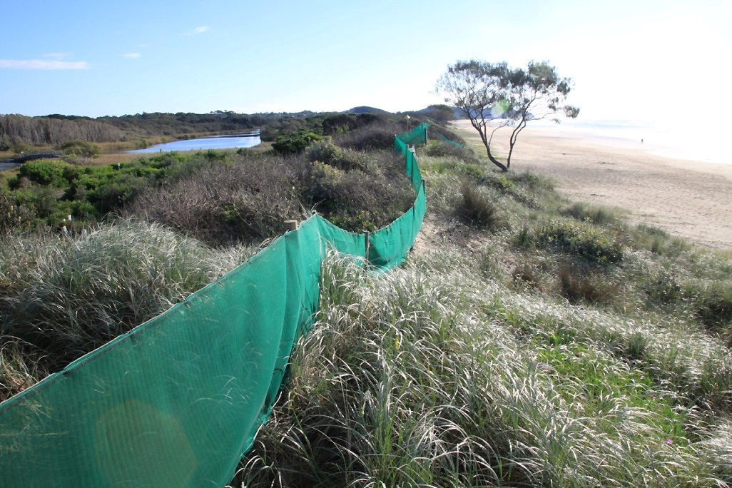 Wind fencing installed on dunes also discourages ad hoc beach access.jpg
