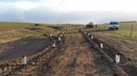 Arthursleigh Yearly Tree Planting