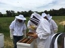 Practical Beekeeping in Tarcutta