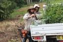 Tregeagle Koala and Lowland Rainforest Restoration - 25th Anniversary Landcare Grant