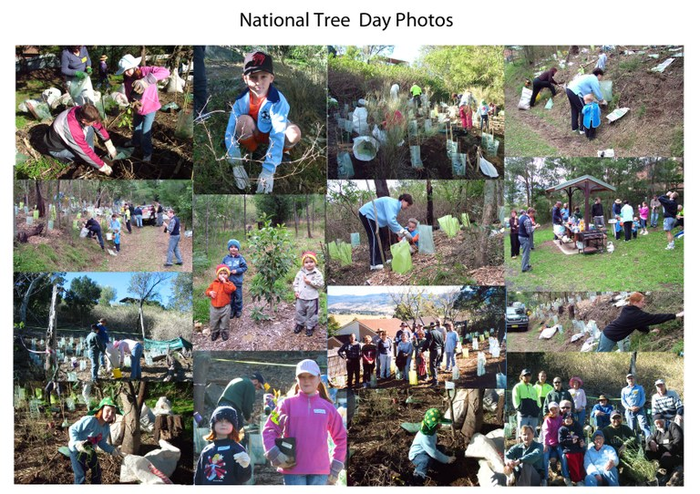 National Tree Day Photos Elizabeth Brownlee Reserve Albion Park