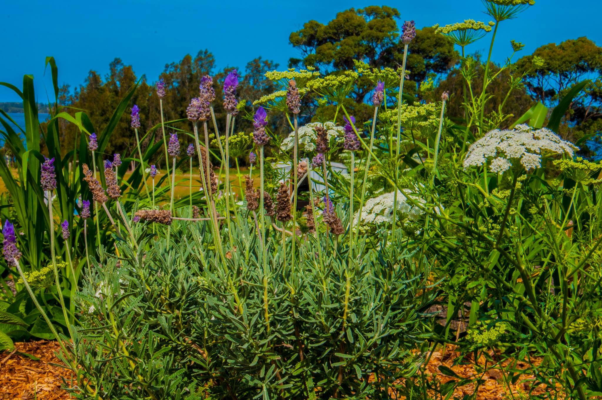 Tuross Community Garden.jpg
