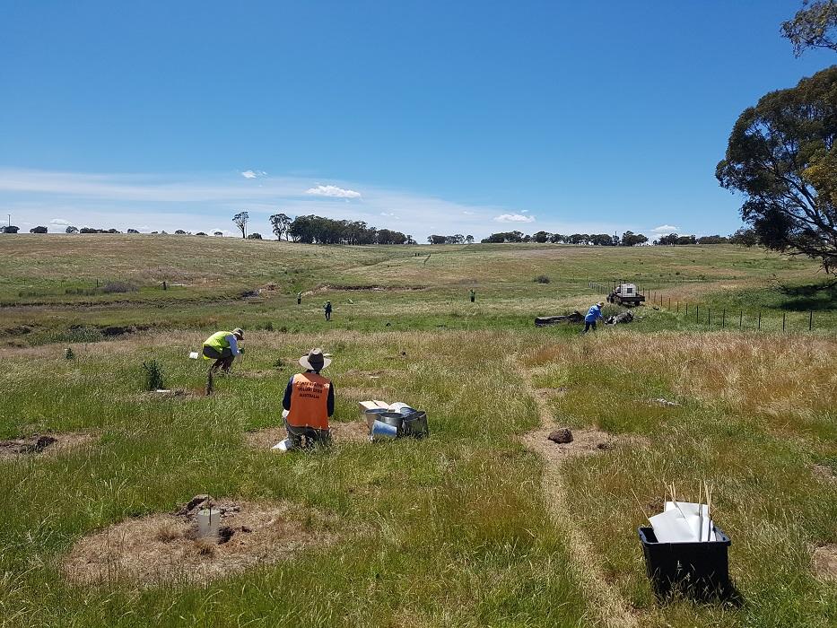 Fullerton Hadley Landcare planting trees with Conservation Volunteers Australia