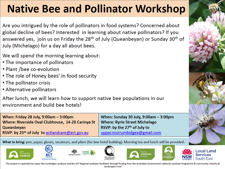 Native Bee & Pollinator workshop